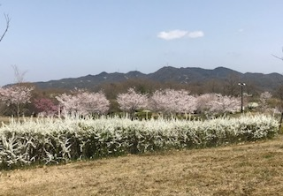 花のコラボ.jpg